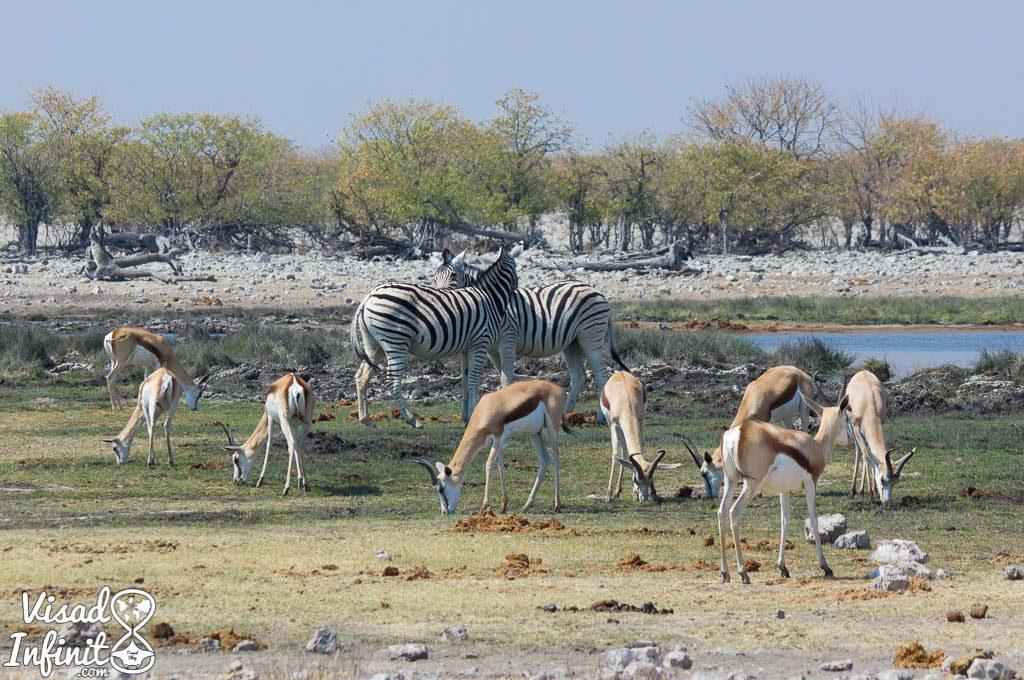 Fauna en Etosha