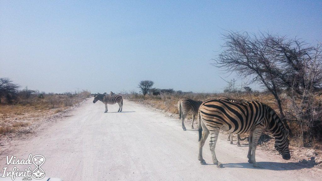 Safari en P.N. de Etosha