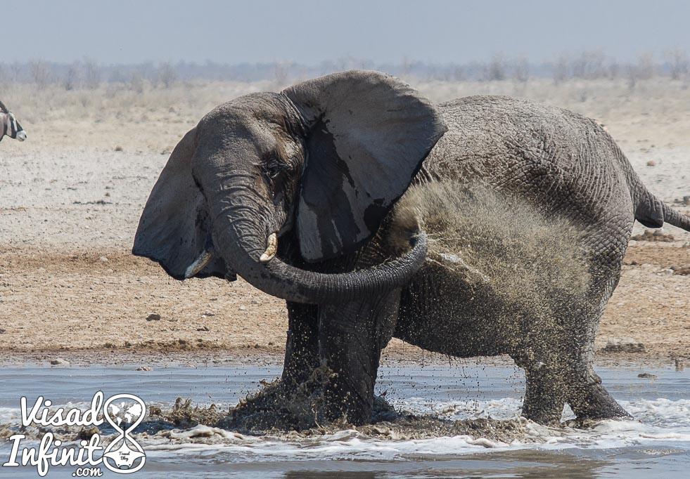 Foto elefante para viajar a Namibia