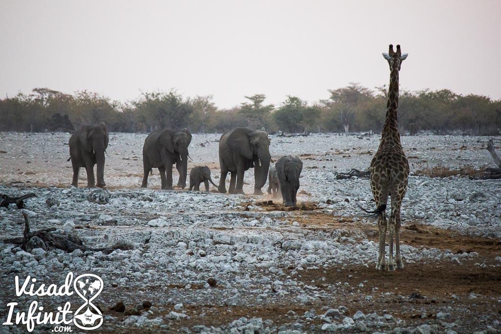 Foto viaje Namibia