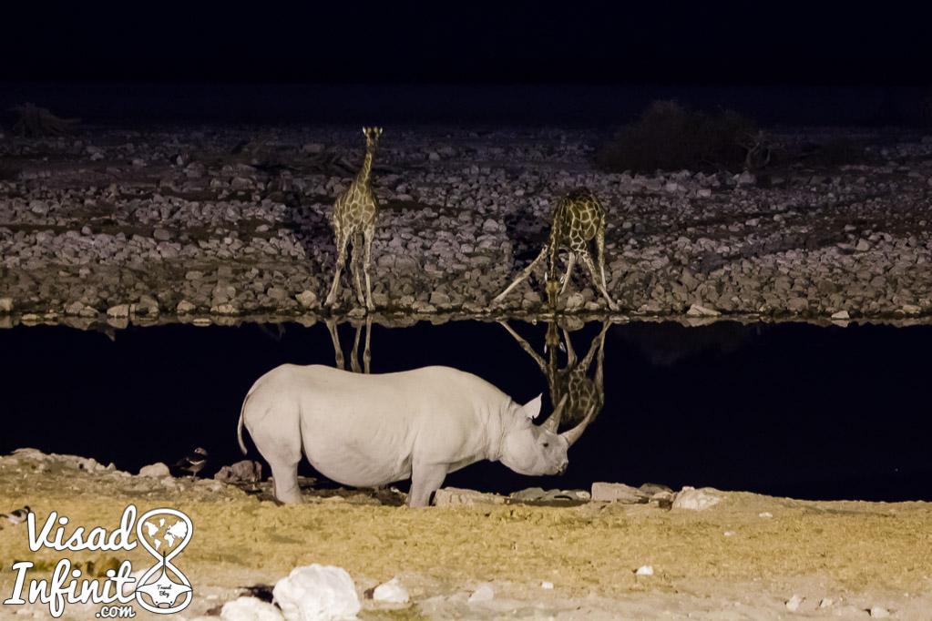 Fotos para viajar a Namibia