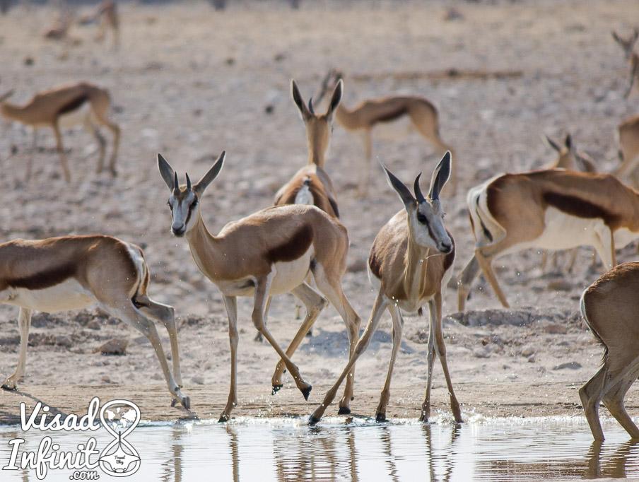 Foto de Antílopes en viaje a Namibia