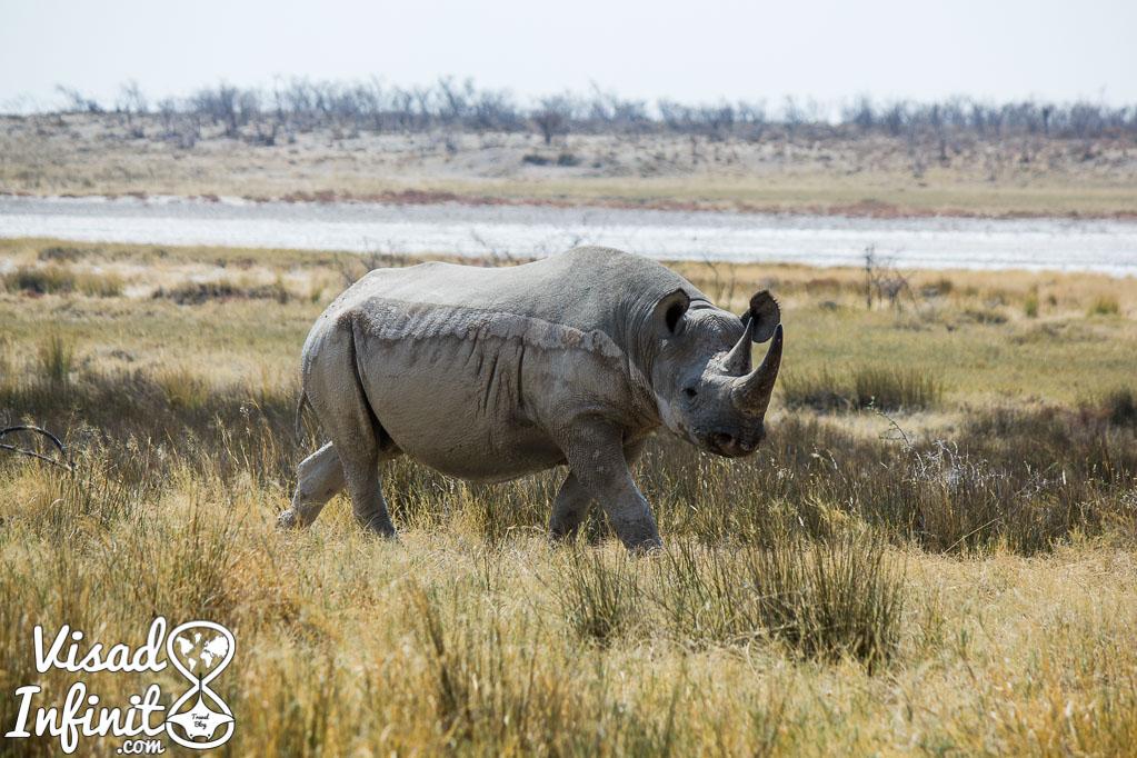 Foto de rinoceronte para viajar a Namibia