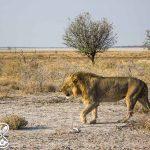fotos que te inspirarán para viajar a Namibia