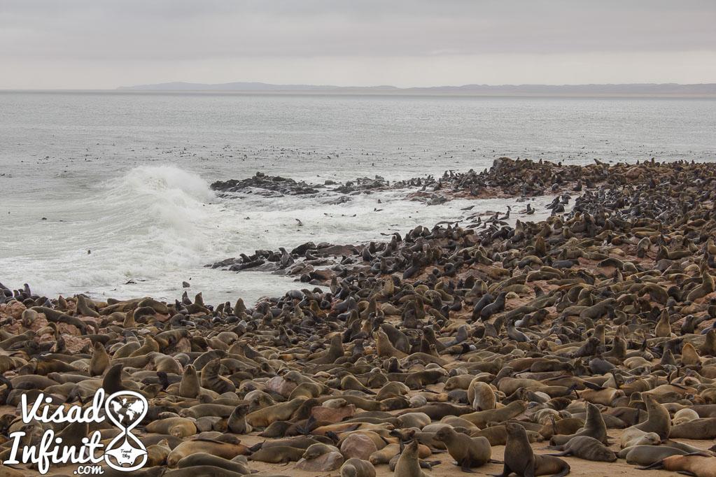 Foto focas Cape Cross en Namibia