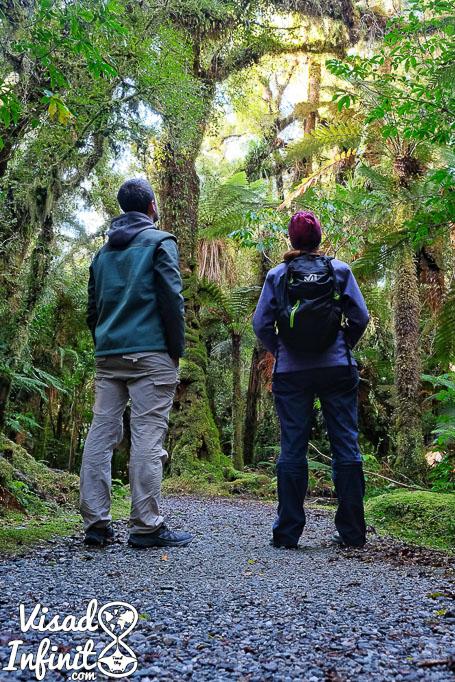 día a día en Nueva Zelanda - 50